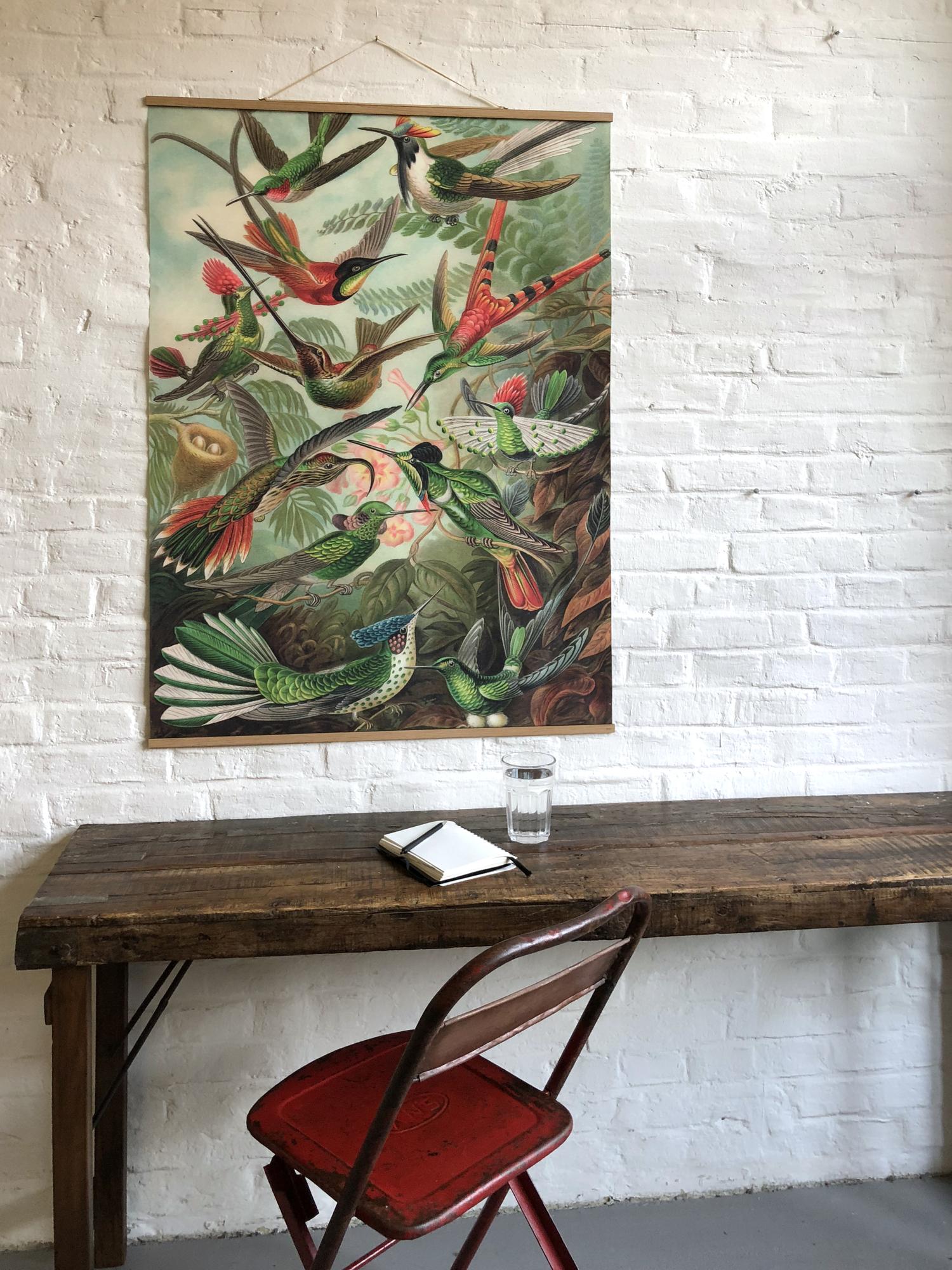 Birds Europe Poster NO 55 eicie